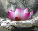 Buddah-Lotus